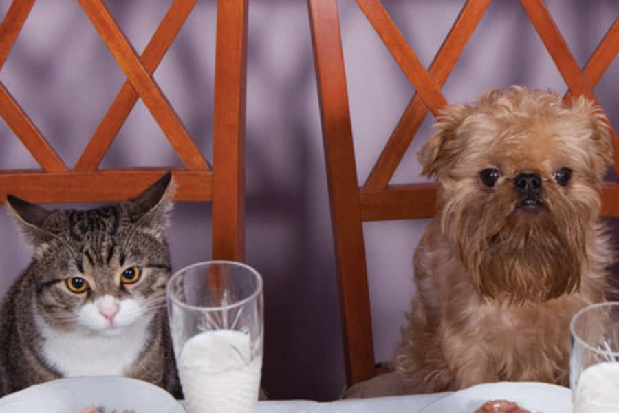 In-Home Care or Kennel? Here's a Menu You and Your Pets Will Love