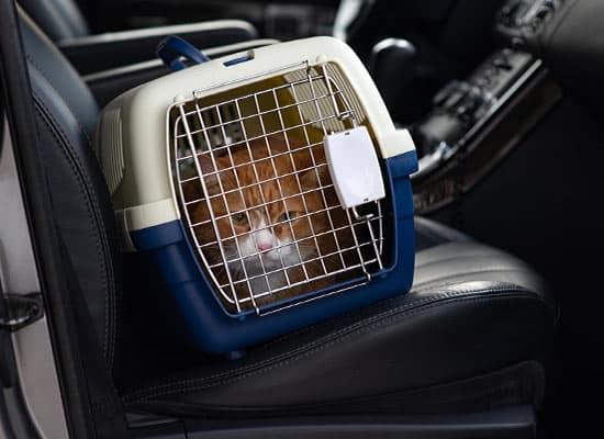 Pet Taxi - Cat Taxi