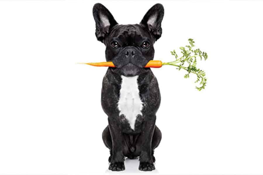 How to Fight Dog Obesity – America's #1 Dog Health Problem