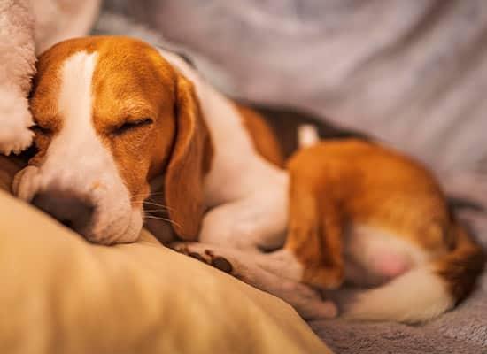 overnight dog care