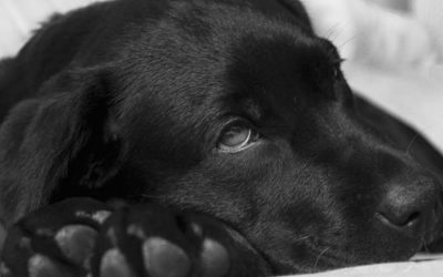 Signs of Illness in Pets