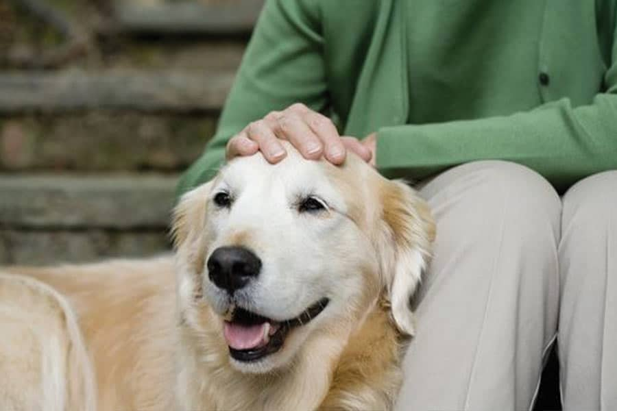 What To Do Now to Help Your Dog When You Return to Work