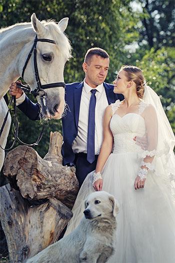 Wedding Pet Services - East Lansing